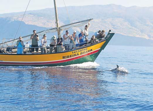 Seit 2003 geht die Ribeira Brava an der Südküste Madeiras auf Whale Watching-Tour.
